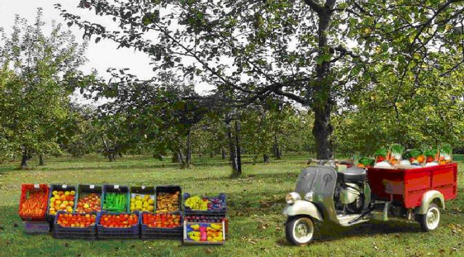 COMMERCIALIZZAZIONE PRODOTTI AGRICOLI SU AREE PRIVATE