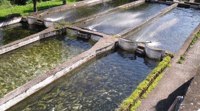 Contributi per acquacoltura Regione Piemonte – FEAMP 2014-2020
