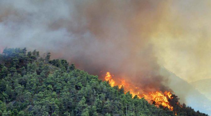 Contributi per prevenzione danni arrecati a foreste da incendi, calamita' naturali ed eventi catastrofici – Regione Piemonte