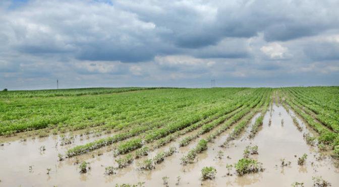 Aiuti ministeriali per imprese agricole colpite da calamità naturali
