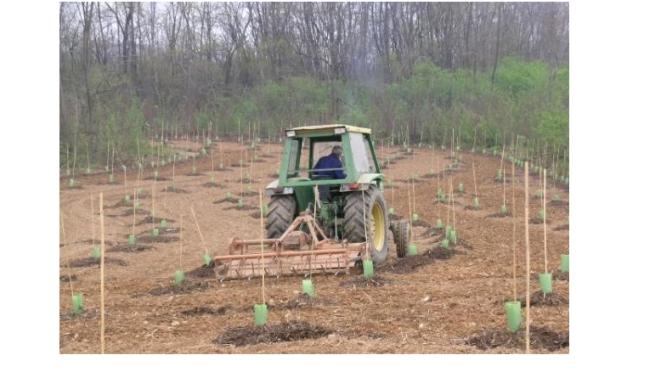 Nuovo bando per imboschimento terreni agricoli PSR MIS 8.1.1. Regione Piemonte